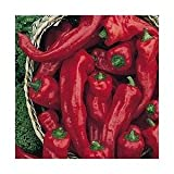 Melrose Heirloom Sweet Pepper 10+ Seeds