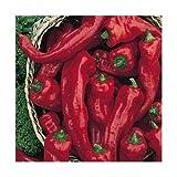 Melrose Heirloom Sweet Pepper 10+ Seeds