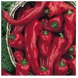 Amazon.com: Melrose Heirloom Sweet Pepper 10 + semillas ...