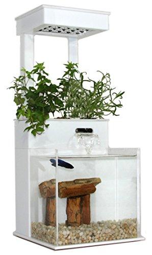 41d9 e WPkL - Fin to Flower Aquaponic Aquarium Mini System A