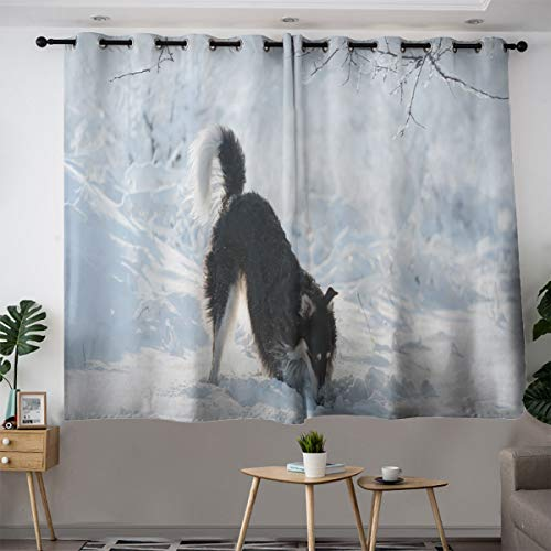 Black and White Hunting Dog Sniffs on The Winter backgroundCustom Design curtainsThick Cloth curtain63×45