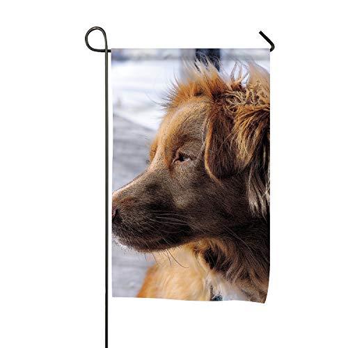 WilBstrn Animals Dog Filter Nova Scotia Duck Tolling Double-Sided Burlap Garden Flag - 28x40 ()