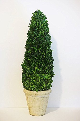 Tradingsmith Preserved Boxwood Cone Tree - - Topiary Preserved Tree
