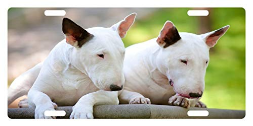 (License Plate Covers Bull Terrier Dog Canine Breed Emblem #1 Personalized Novelty, Custom Decorative Metal Sign Front Car Tag for US Vehicles 12 x 6)