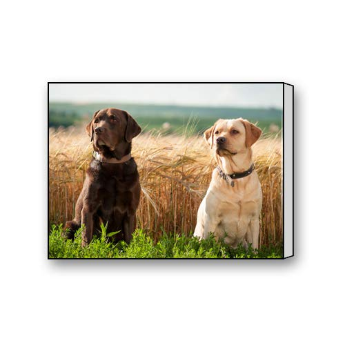 Chocolate Labrador Retriever Custom Canvas Print Personal Photos Print on Canvas Ready to Hang on Your Wall as a Modern Art 10