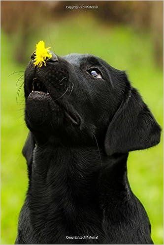 Amazon In Buy Black Labrador Puppy Dog With Dandelion Journal