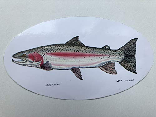 Pescador on the Fly | Fish Decals | Designed by Jeff Currier | Stunning Detail | Great Gift Idea for Fisherman | Steelhead Trout | 2 Stickers