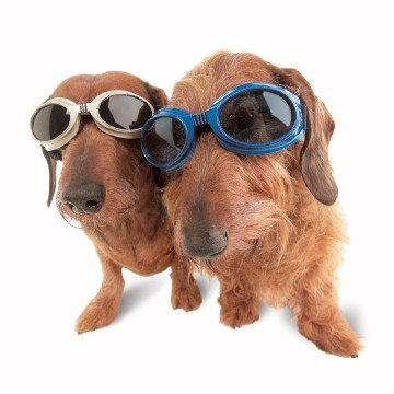 Doggles Originalz Small Frame Goggles for Dogs with Smoke Lens