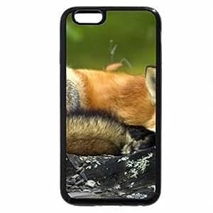 iPhone 6S Plus Case, iPhone 6 Plus Case, Sleeping fox