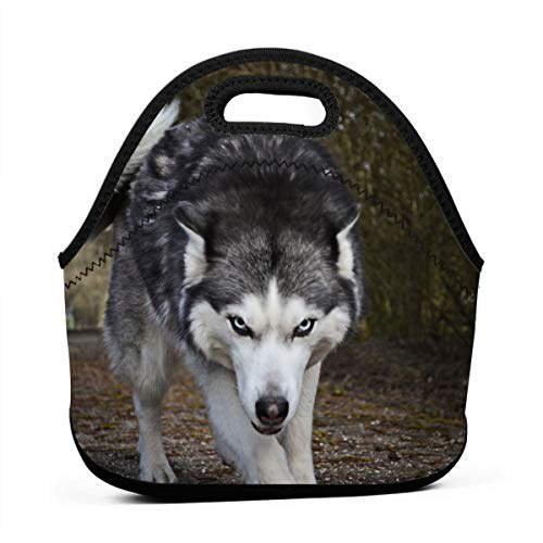 A Fierce Husky Dog Lunch Bag Cute Reusable Portable Insulated Lunch Bag Outdoor Picnic Food Bag for Kids, Boys, Girls, Women and Men