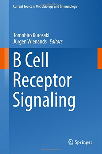 B Cell Receptor Signaling  Current Topics In Microbiology And Immunology
