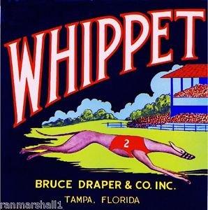 Whippet Dog Magnet - MAGNET Tampa Florida Whippet Dog Racing Orange Citrus Fruit Crate Magnet Print