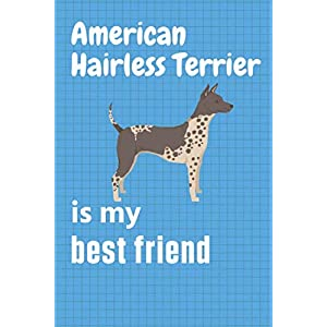 American Hairless Terrier is my best friend: For American Hairless Terrier Dog Fans 22