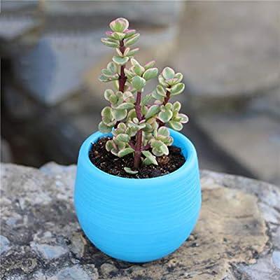 NWHEBET - Maceta pequeña de plástico de 10, 16 cm para interiores ...