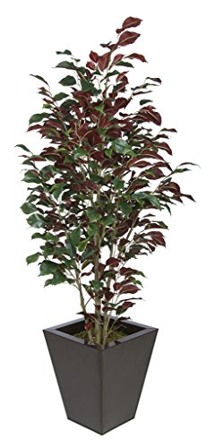 Artificial Red Ficus (Capensia) in Square Zinc (Gloss Brown) by House of Silk Flowers, Inc.