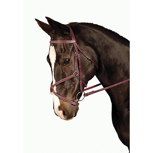 - Kincade Padded Figure 8 Cob Bridle, Brown