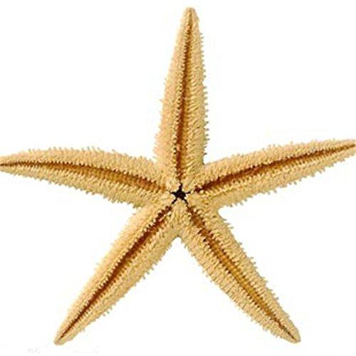 10 Estrellas de mar naturales no artificiales para decoracion acuario peceras y hogar collage botellas baños cocinas floreros guirnaldas manualidades..de 6 ...