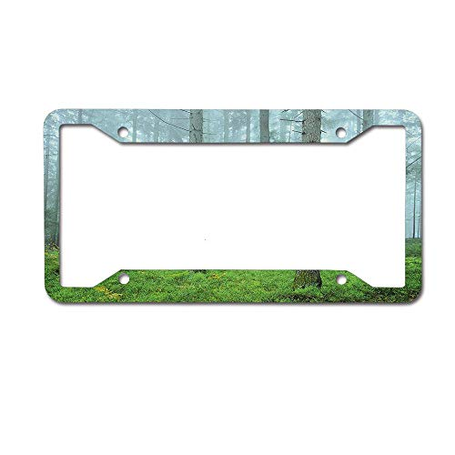 MichelleSmithred Foggy Woodland Mystic Trees Foliage Autumn Morning Tranquil Landscape License Plate Frame Aluminum Metal Tag for US Canada Standard 4 Holes Screws