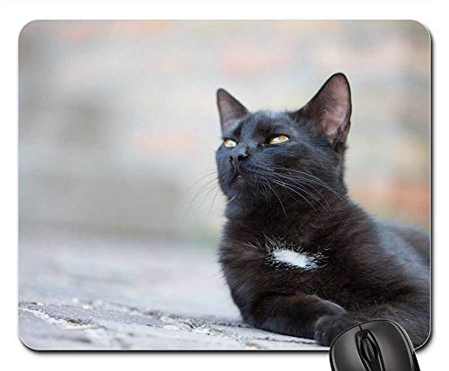 Mouse Pads - Domestic Cat Black Cat Kitten Cat Pets Black Puss 3