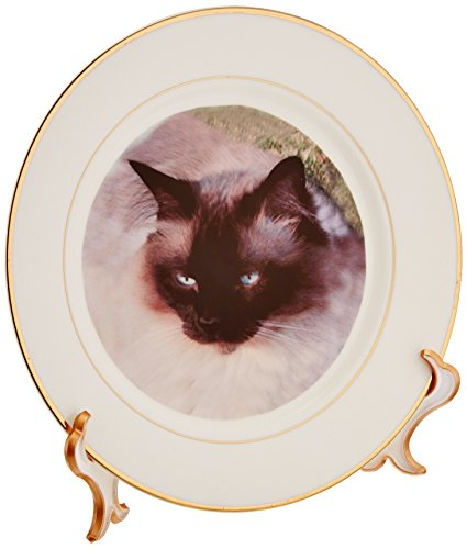 3dRose Siamese Cat 8-Inch Porcelain Plate