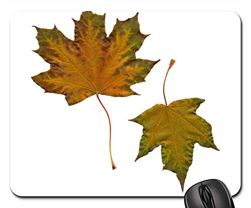 Mouse Pad - Leaves Sheet Maple Autumn Leaves Yellow Leaves