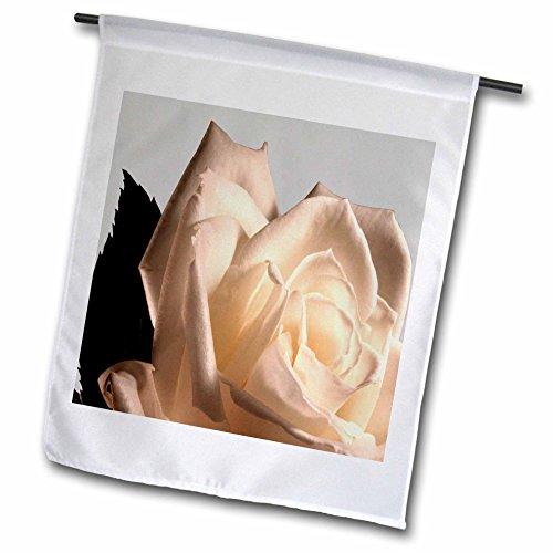 - 3dRose TDSwhite – Summer Seasonal Nature Photos - Floral Pretty White Rose - 12 x 18 inch Garden Flag (fl_284590_1)