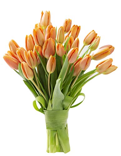 - Blooms2Door 30 Orange Tulips (Farm-Fresh Flowers, Cut-to-Order, and Homegrown in the USA)