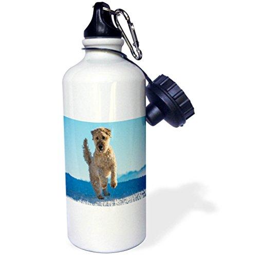 Irish Water Terrier (3dRose Dog - Image of Irish Terrier On the Beach Jumping - 21 oz Sports Water Bottle (wb_255418_1))