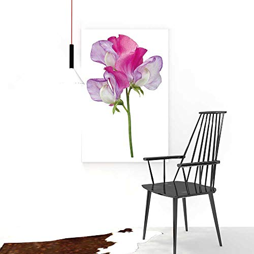 (Art The Picture for Home Decoration Frameless Single Pink and Purple Sweet Pea Flower lathyrus odoratus with Three florets isolatedon  for Home Decorations Wall Decor W24 x H32)