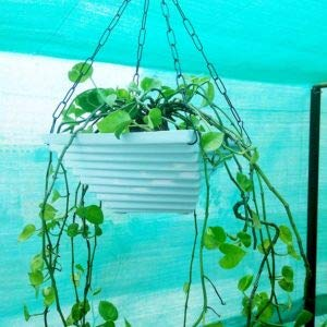 Antier Twister White Hanging Chain Pot/Decorative Twister Pot