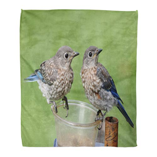 - Emvency Throw Blanket Warm Cozy Print Flannel Pair of Juvenile Eastern Bluebirds Sialia Sialis Sitting on Feeder Comfortable Soft for Bed Sofa and Couch 50x60 Inches