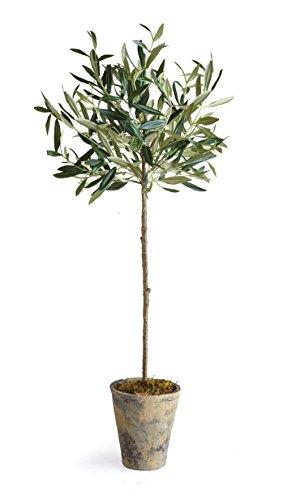 Napa Home & Garden Olive Tree in Pot, 30-Inch