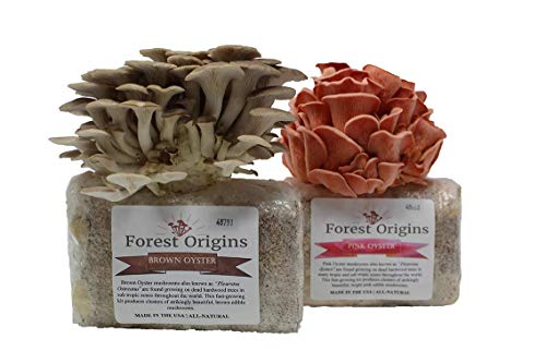 Pink and Brown Oyster Mushroom Growing Kit-Indoor Mushroom Grow Kit-Grow Edible Mushroom in Your Home-Top Gardening Gift, Holiday Gift, Unique Gift, Mother's Day Gift, Birthday Gift, Fathers Day Gift - Oyster Mushroom Growing