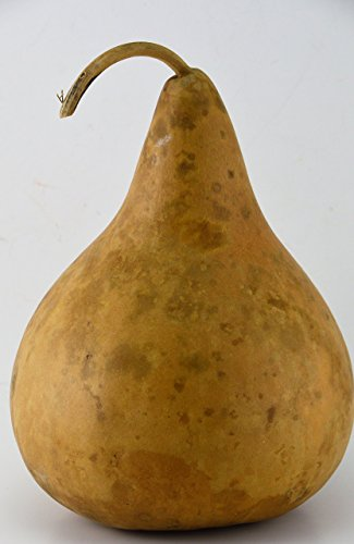 Gourd Decorations, Plain gourd, perfect for crafting, make your own birdhouse, Kids Crafts, Natural Crafts, Mother Nature Crafts,