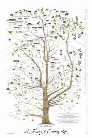 amazon com tree of life poster giclee print wall art natural