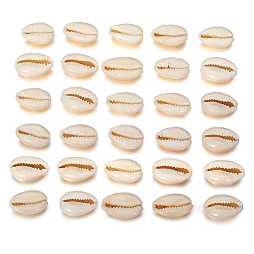 30pcs Natural Spiral Shell Beads Sea Shells Beach Seashells Cowrie Shells Charms and Beads for DIY Craft Jewelry Making -