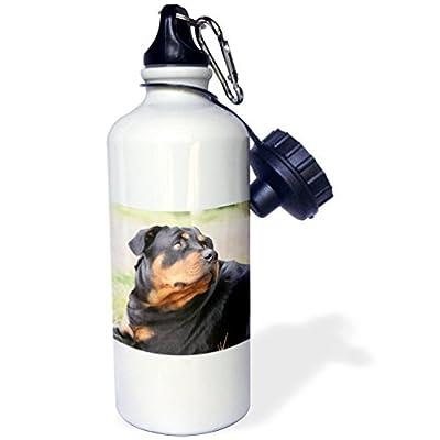 Statuear Rottweiler en aluminium 567gram Bouteille d'eau 600ml Cadeau