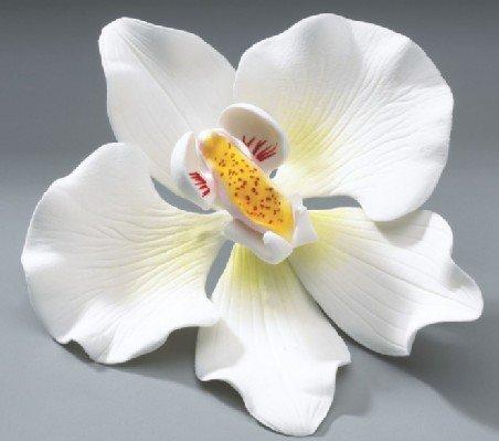Orchid Wedding in Gum Paste Cake Decoration