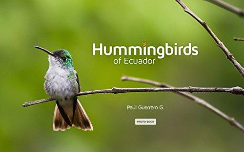 Hummingbirds of Ecuador by [Guerrero G.,Paúl]
