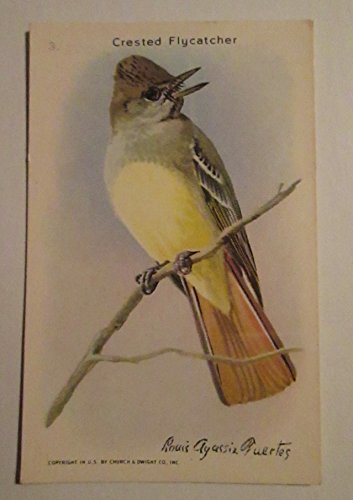 Flycatcher Antique - Useful Birds of America #3 Crested Flycatcher - 10th Series 1938 (Church & Dwight Co. - Arm & Hammer)