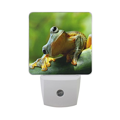 - Naanle Set of 2 Cute Green Frog Rain Forest Auto Sensor LED Dusk to Dawn Night Light Plug in Indoor for Adults