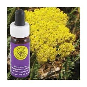 Services Flower Essence - or Yarrow essence de fleur - 0,25 oz (Multi-Pack)