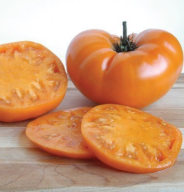 David's Garden Seeds Tomato Beefsteak Yellow Brandywine D714A (Orange) 50 Organic Heirloom Seeds