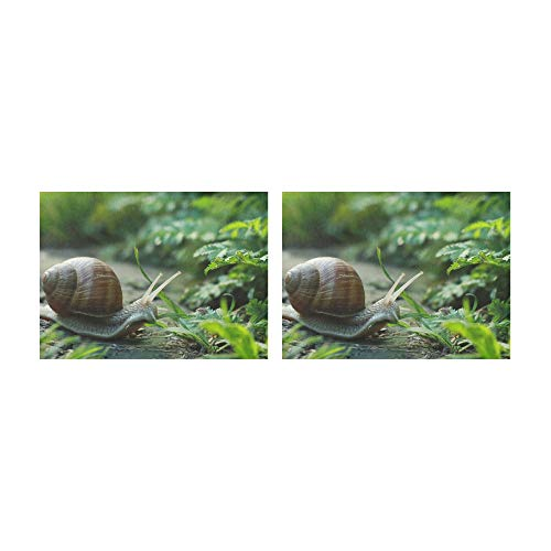 HUAPIN Placemats Curious Snails Crawl On Concrete Table Mats Set of 2 Non-Slip Washable Coffee Mats Heat Resistant Kitchen Tablemats for Dining Table Indoor Outdoor14'' X 19''(35x48cm)
