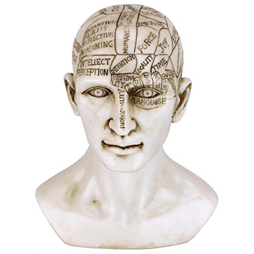 Design Toscano Phrenology The Science of The Brain Victorian Replica Statue, Ancient Ivory by Design Toscano