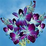 #3: GlobalRose Blue Orchids- 20 Fresh Cut Dendobrium Flowers