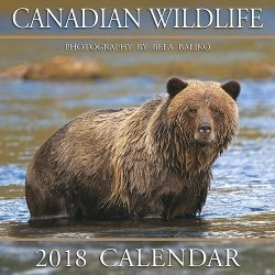 "Download 2018 Baliko Canadian Wildlife 12""x12"" Wall Calendars pdf epub"