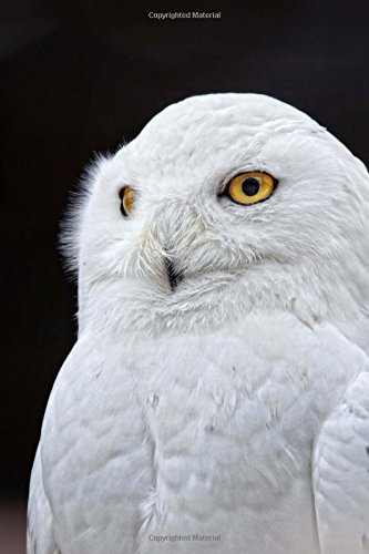 Download Snowy Owl Bird Journal: 150 Page Lined Notebook/Diary PDF