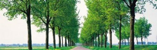 Tree-lined road Noord Holland Edam vicinty Netherlands Poster Print (18 x 6)