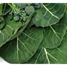 Collards Seeds- Vates- Heirloom Variety- 1,000+ Seeds